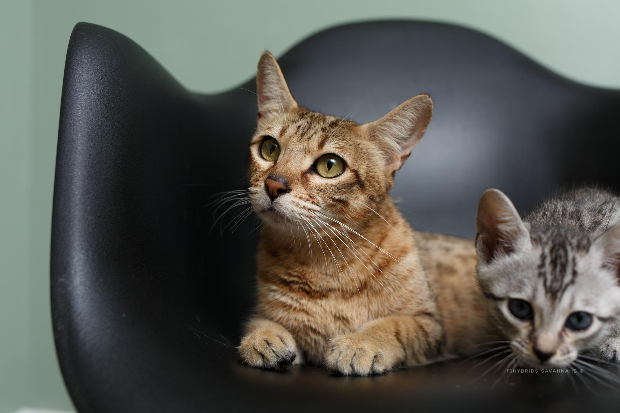 5.6.kittens-41.JPG