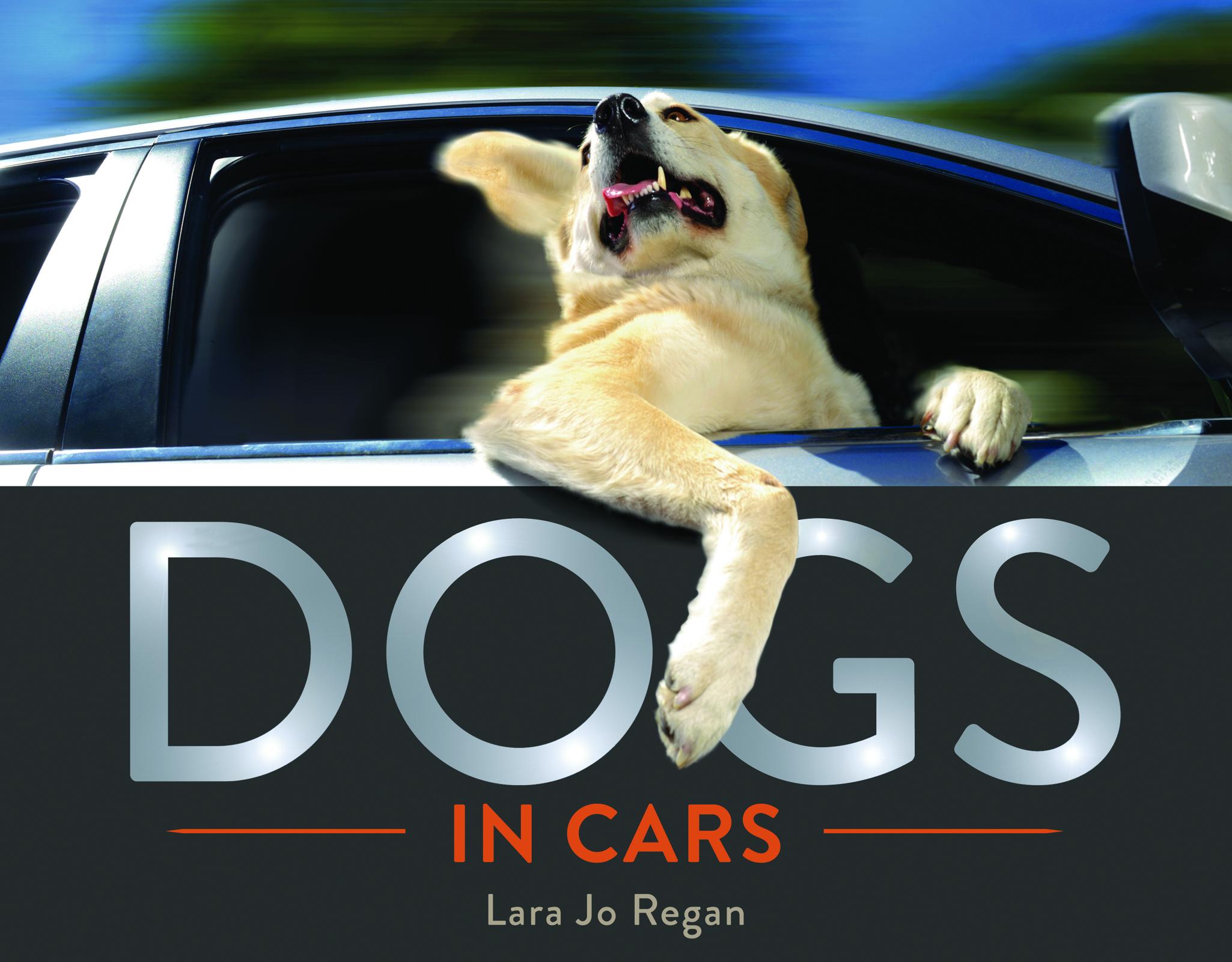 Dogs in Cars.jpg