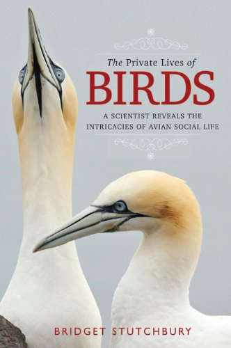 Private Lives of Birds.jpg