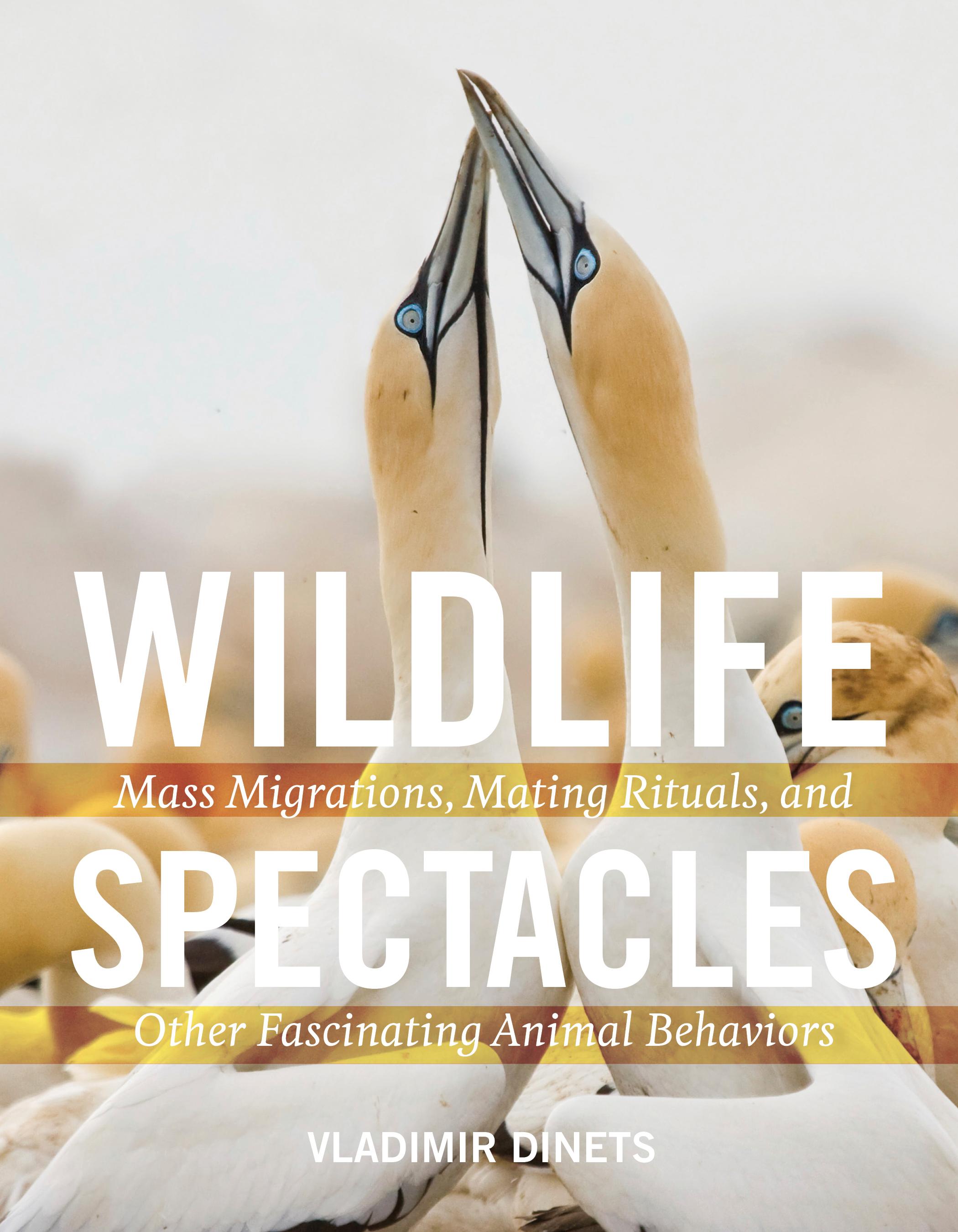 Wildlife Spectacles.jpg
