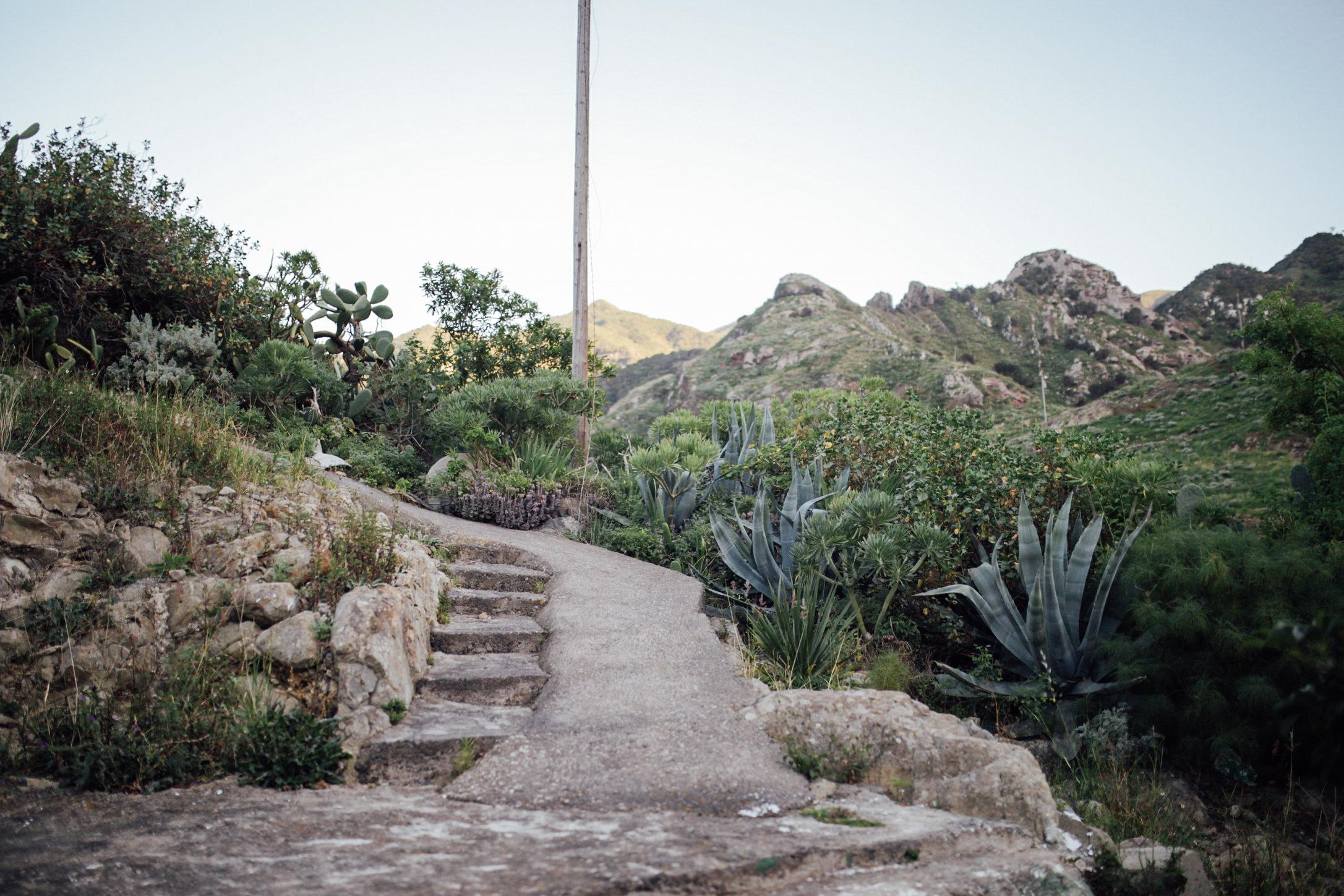 Algunas plantas típicas del paisaje de Anaga // Some typical plants of Anaga's landscape
