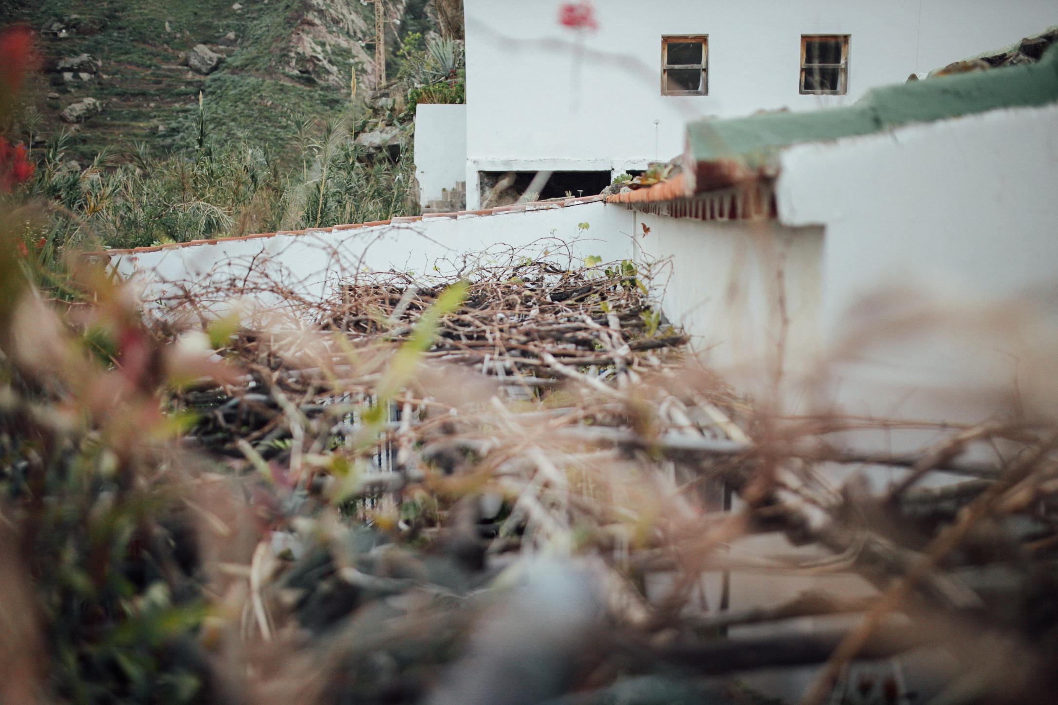 Parras en el tejado:La gente del pueblo todavía sigue haciendo su propio vino //Grapevines on the roof: People still keep making their own wine