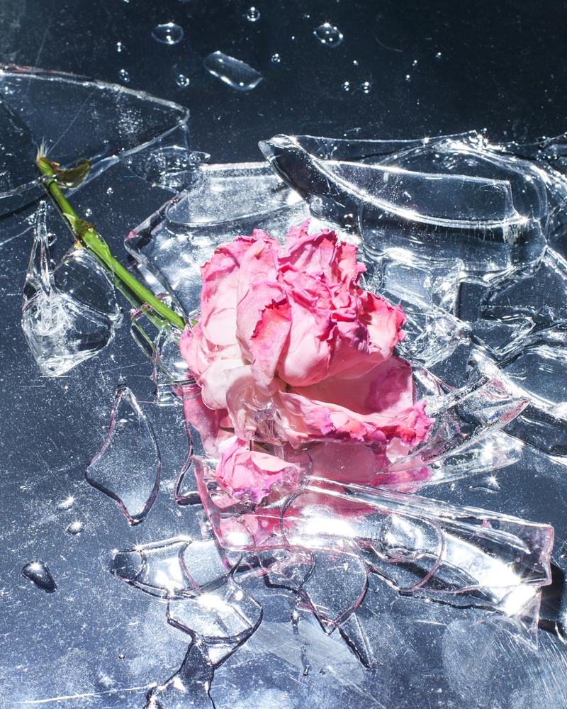 ice rose.jpg
