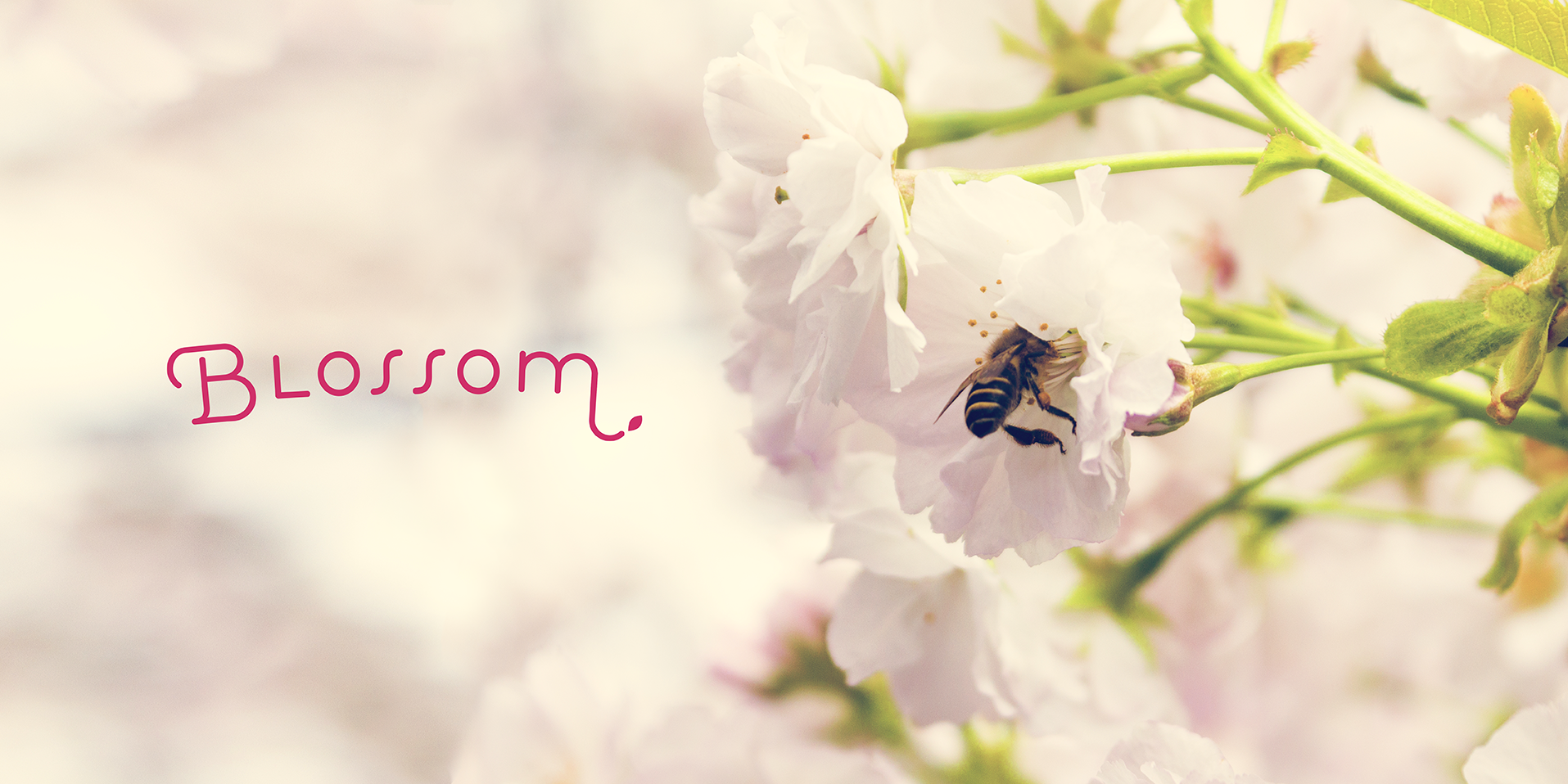 Blossom_01_A.png