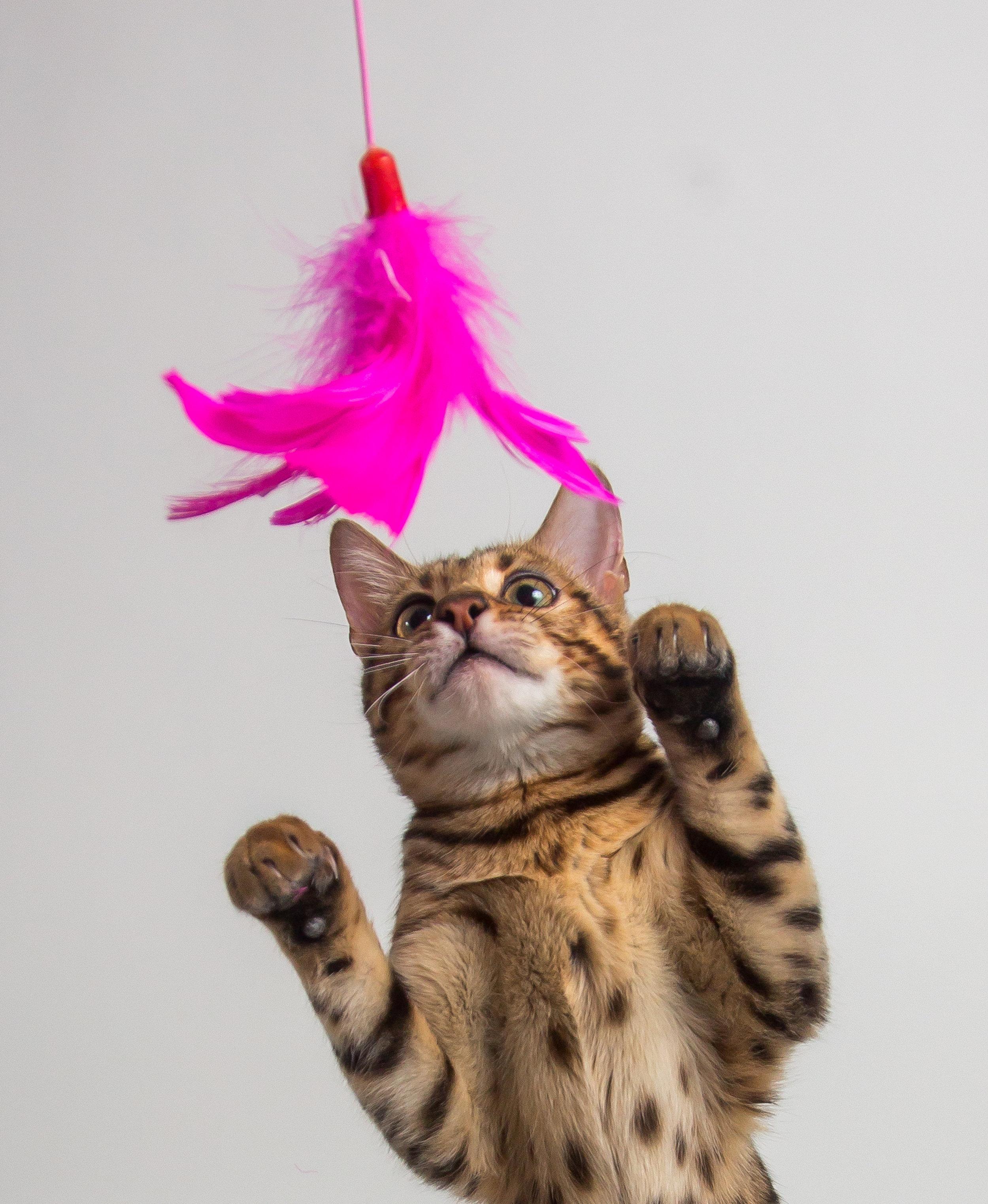 cat play exercise energy.jpg