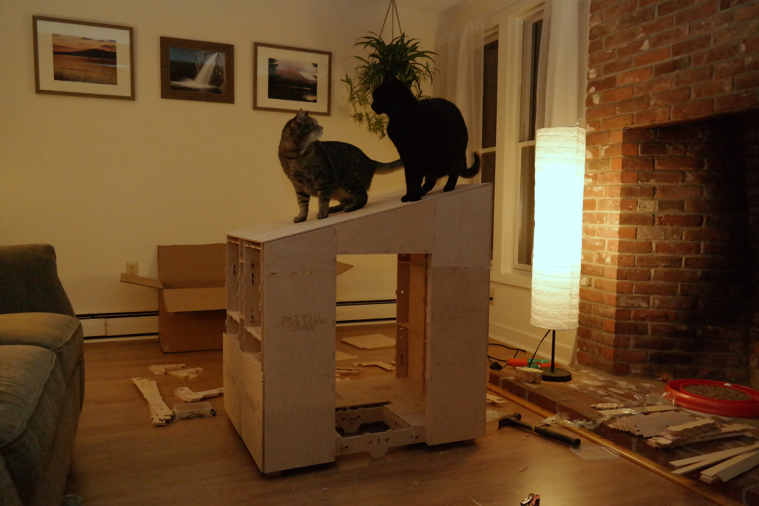 See! It's sturdy enough for two cats!