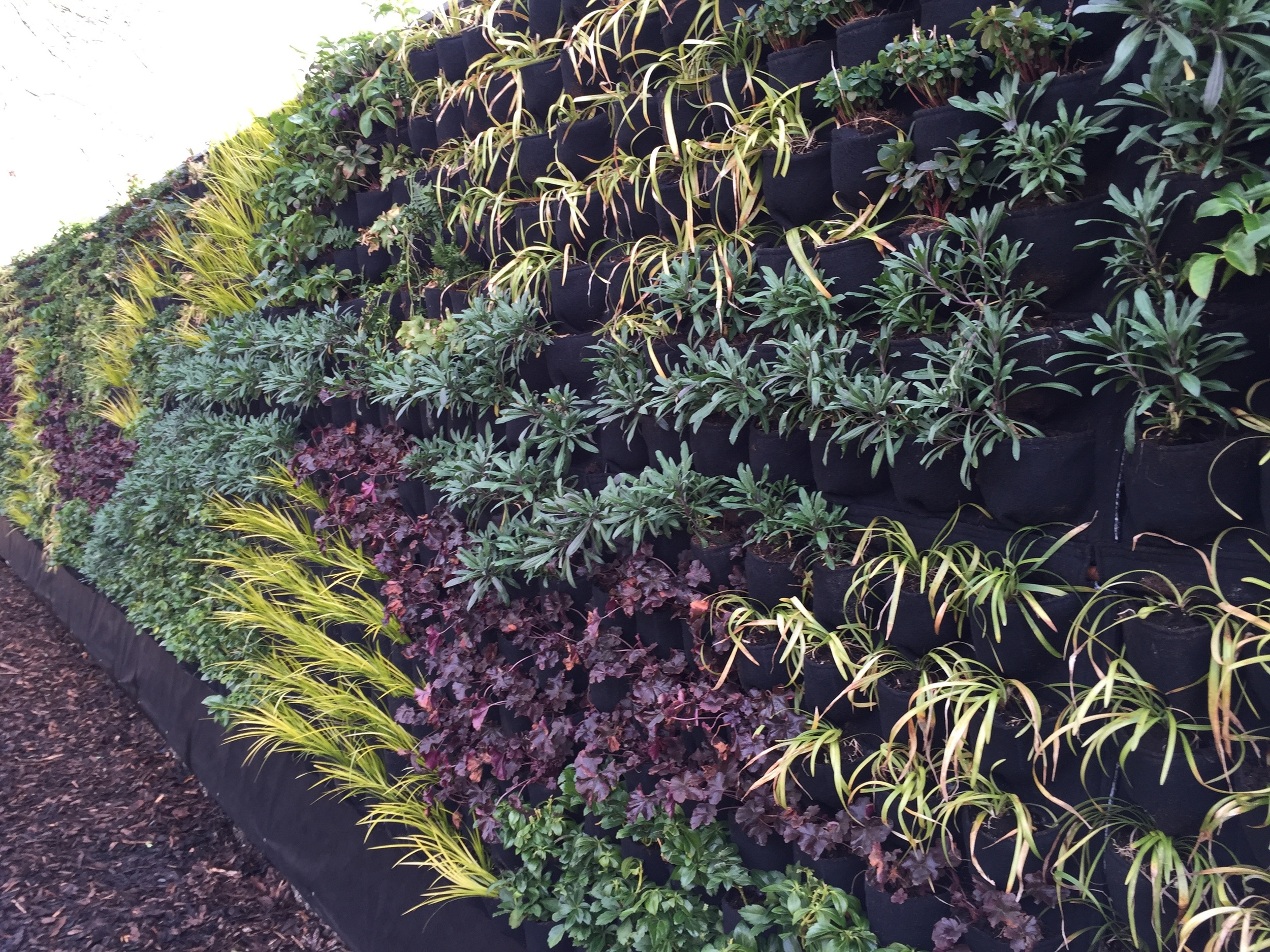 An example of a green wall using the fabric-based system we are using at Chelsea.