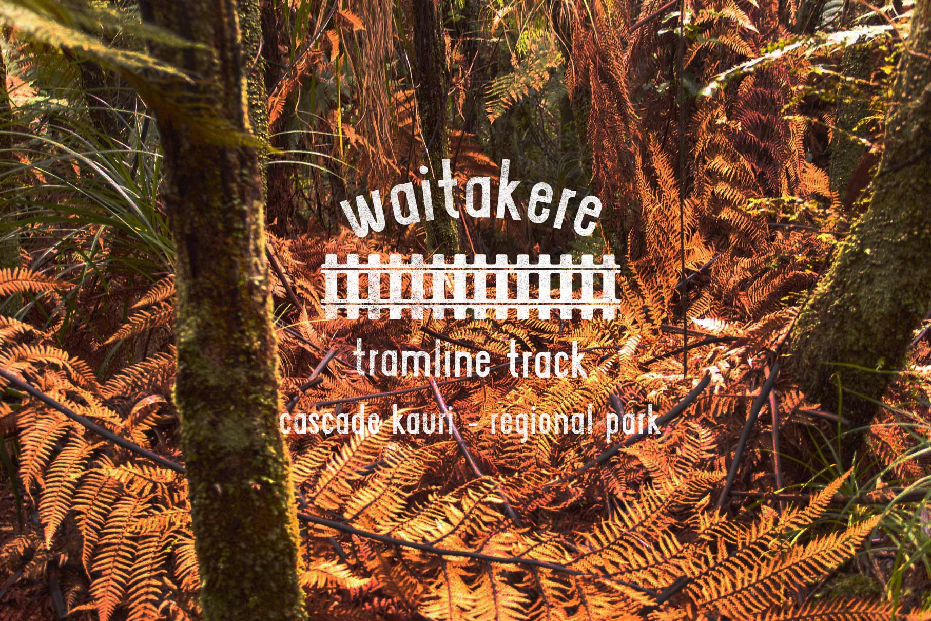 waitakere-tramline11.jpg