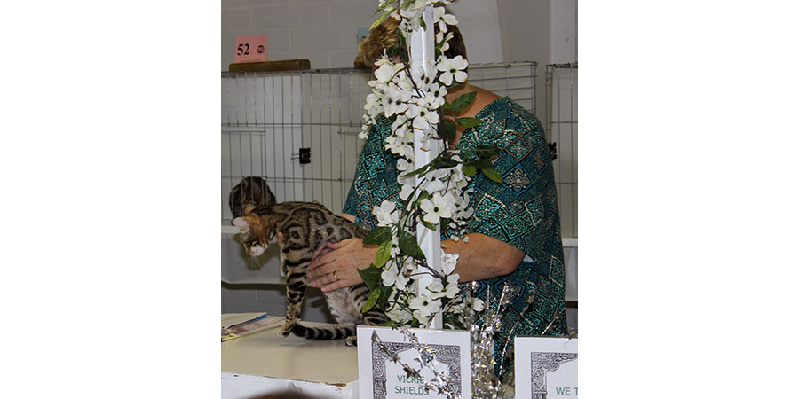 cat showIMG_4230ss.jpg