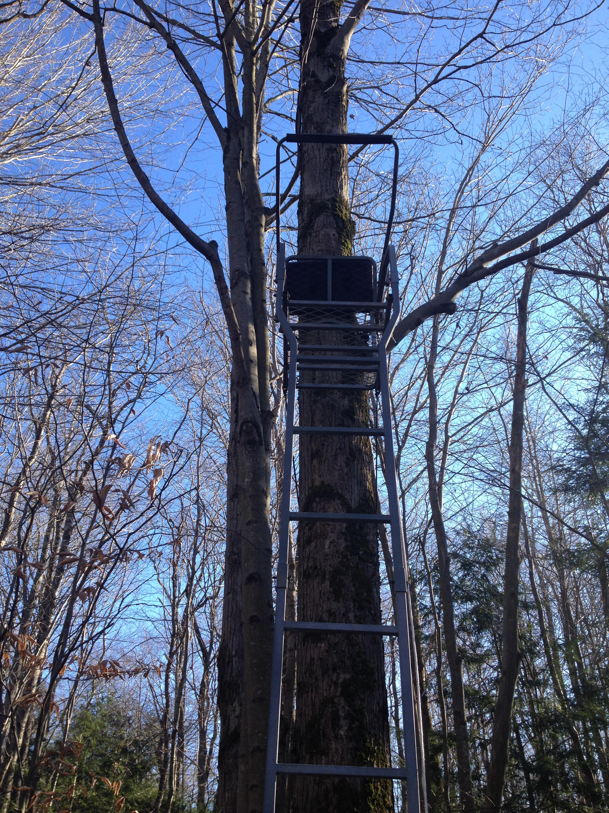 Plenty of ladder stands in prime locations.