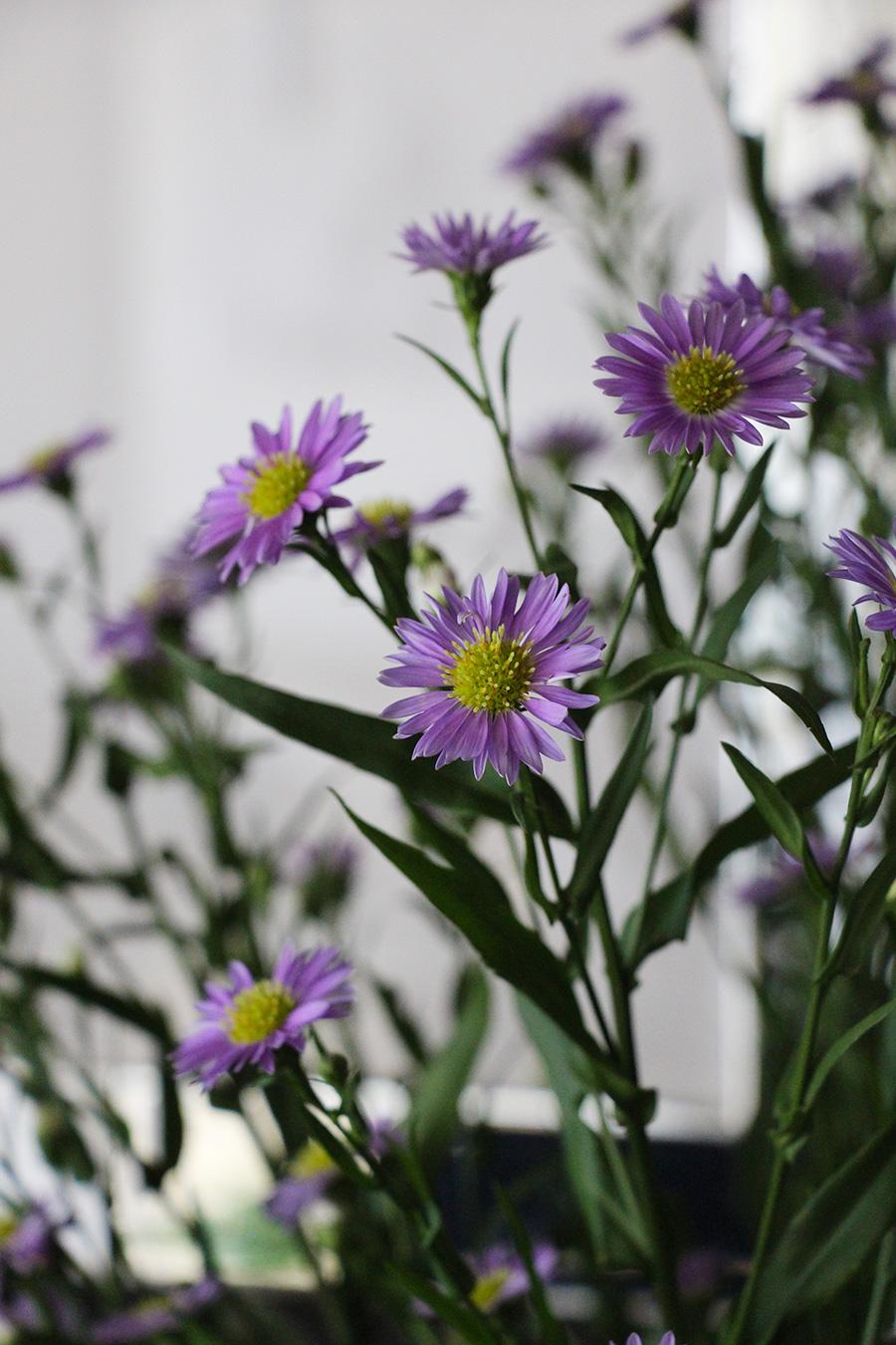 flowers-detail-mirror-frame.jpg