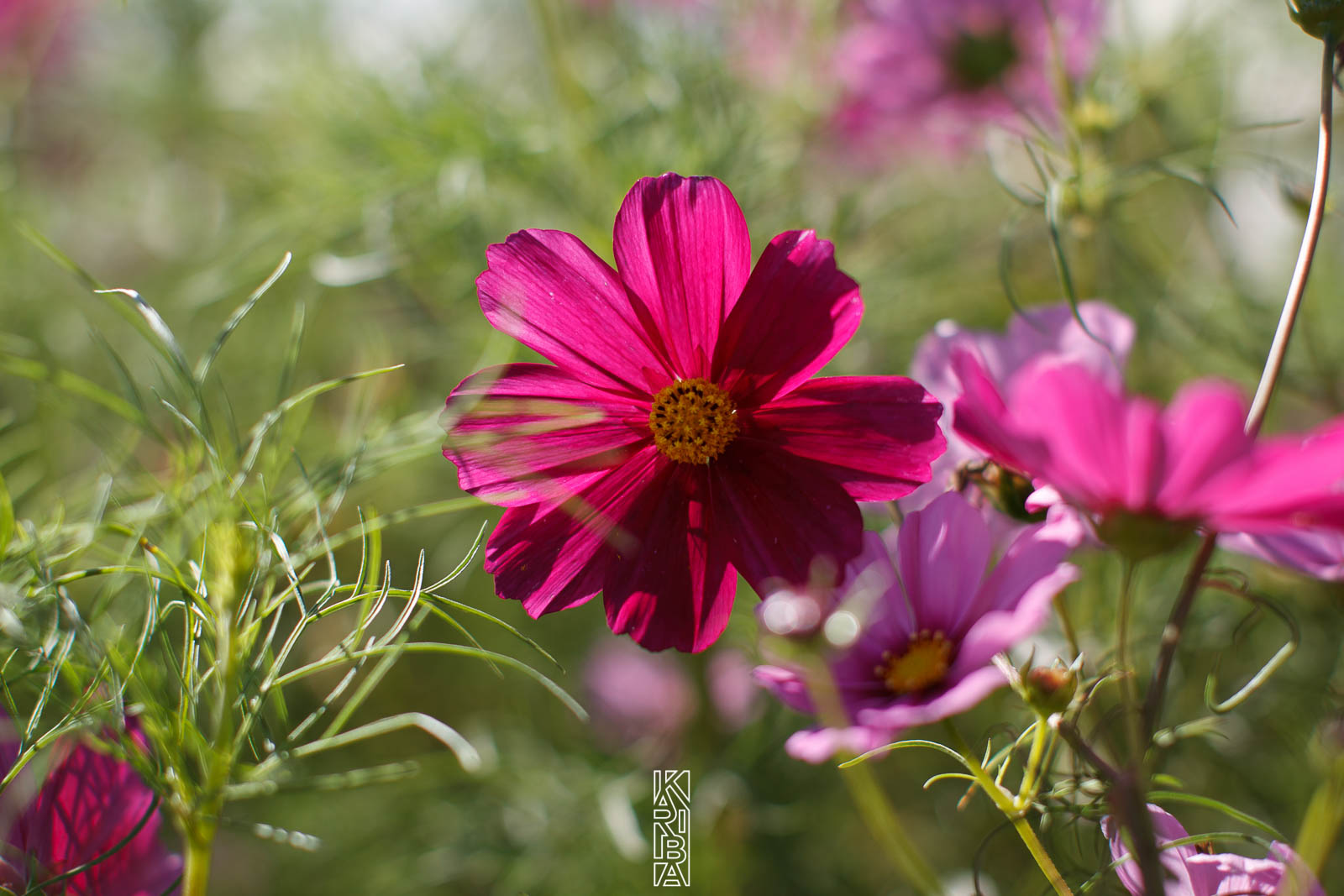 024-planjardin-fleurs.jpg
