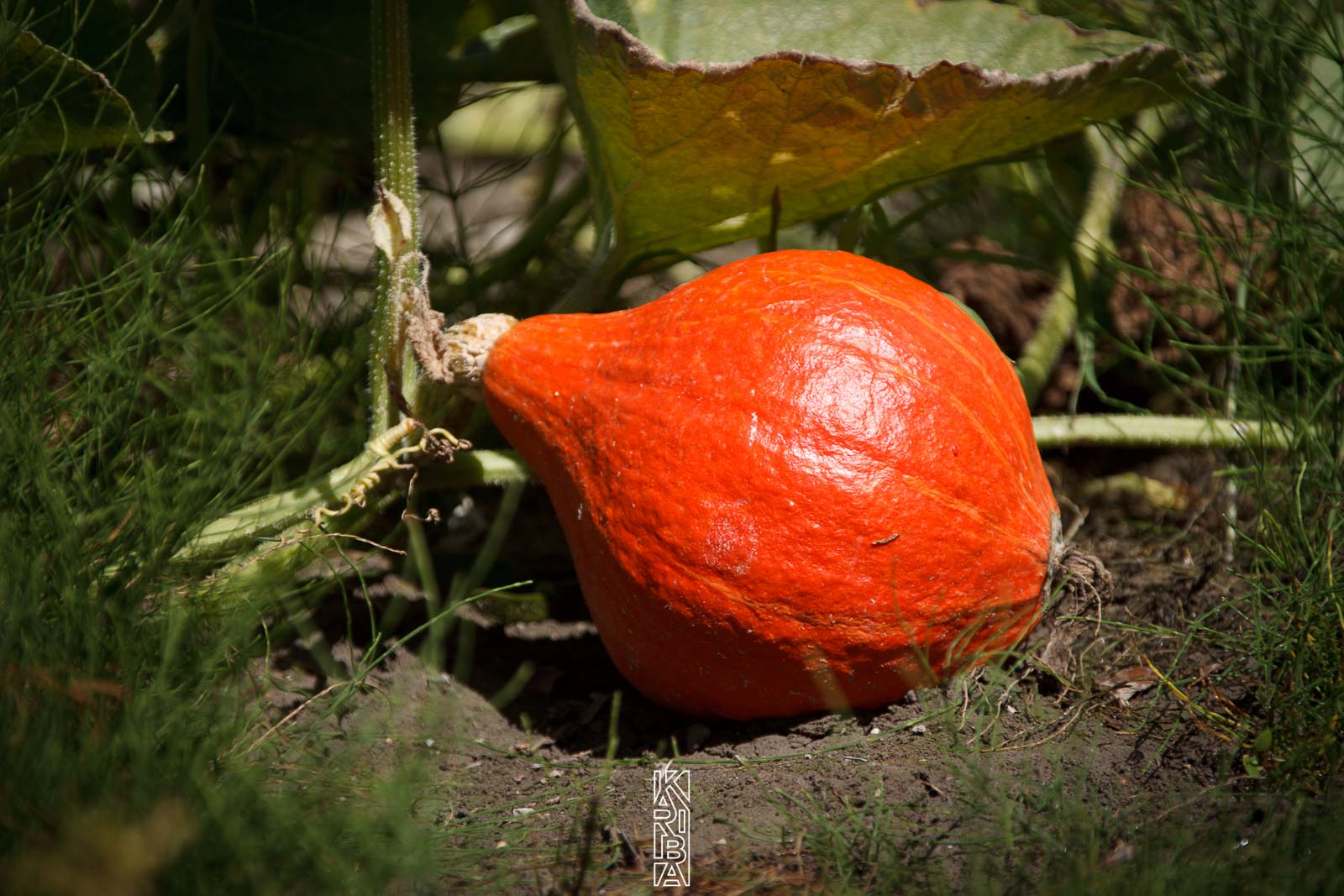 053-planjardin-légumes.jpg