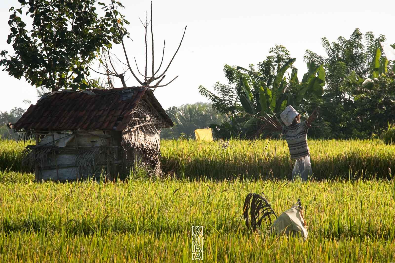 261-Bali-092009.jpg