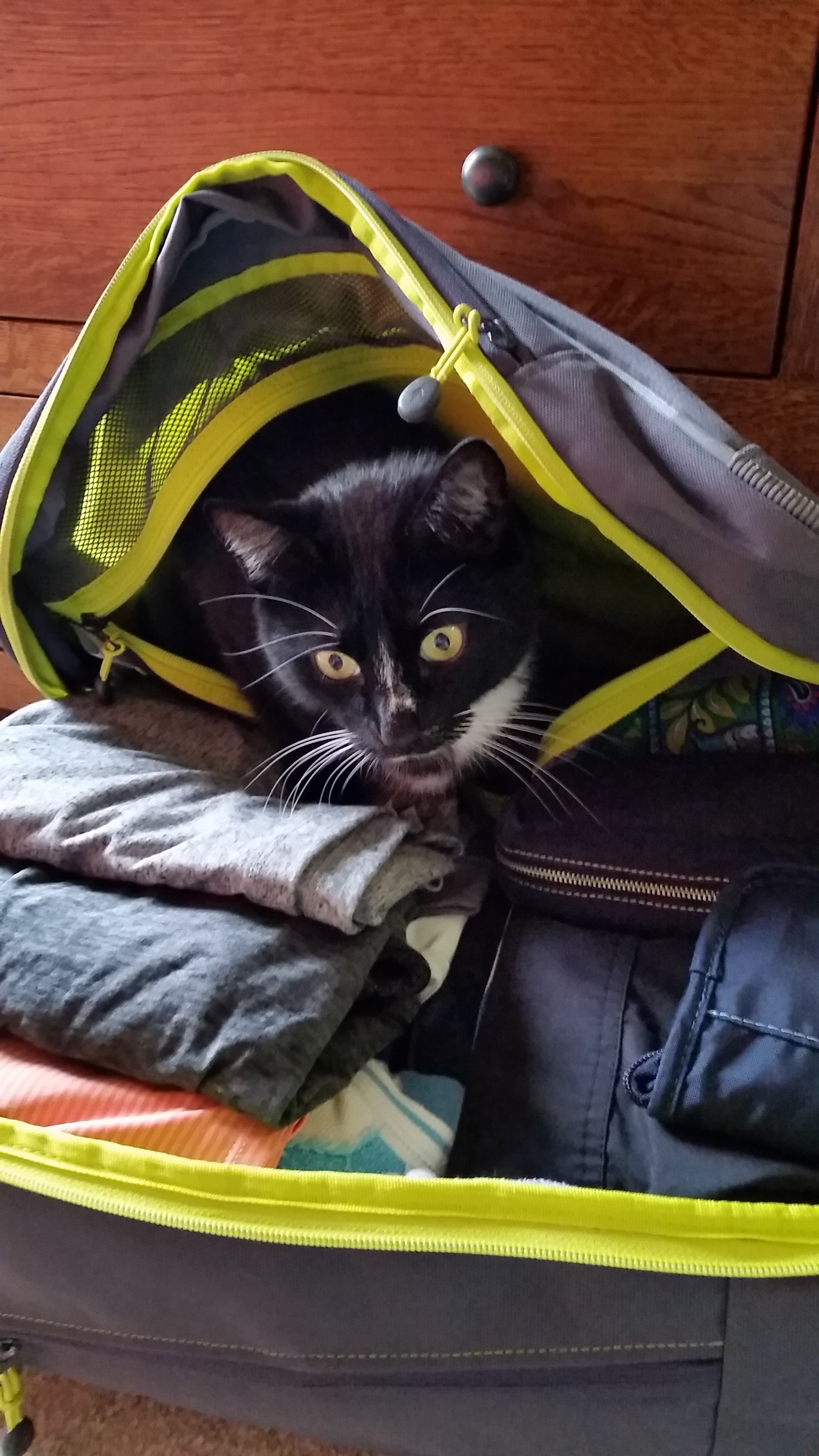 My cat, Siggy, helping with the packing.