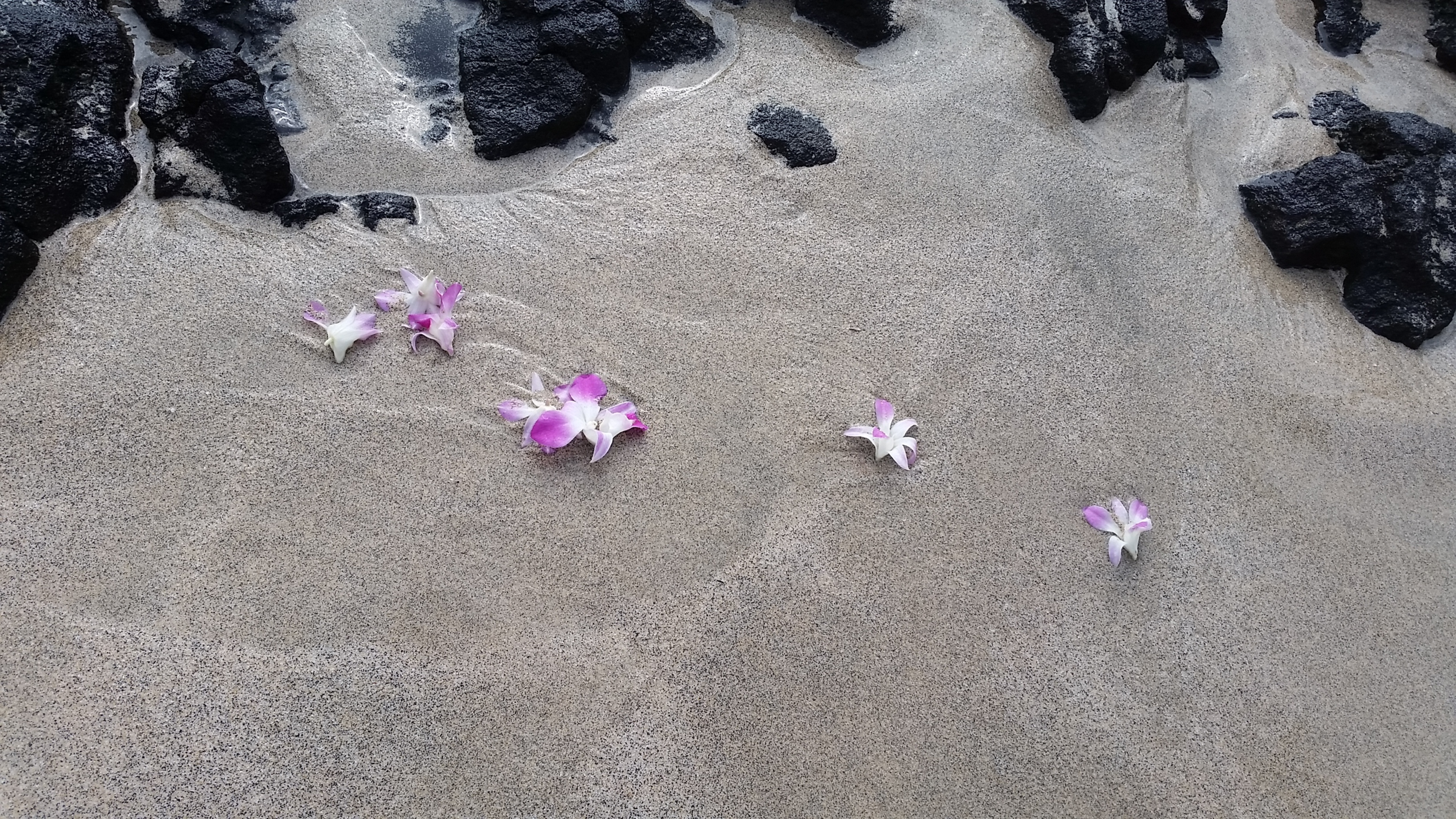 Our flowers from our anniversary leis headed out to sea.