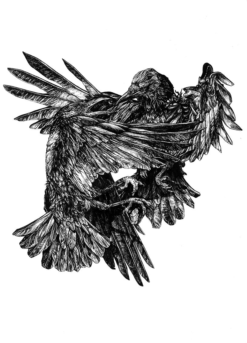 Crows web.jpg