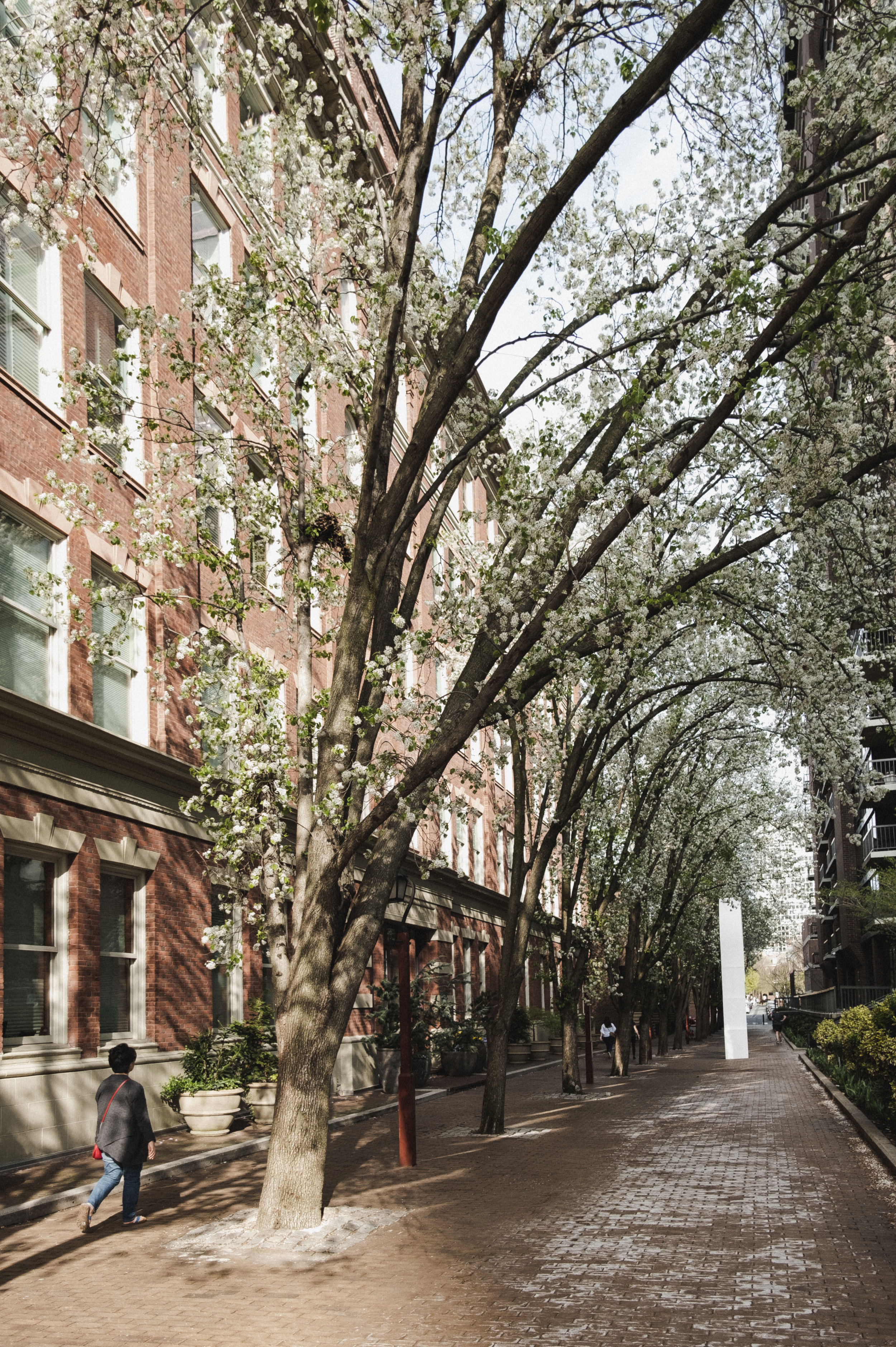 2019_TREES WALKWAY_THE PHILLY CHECKLIST-2.jpg