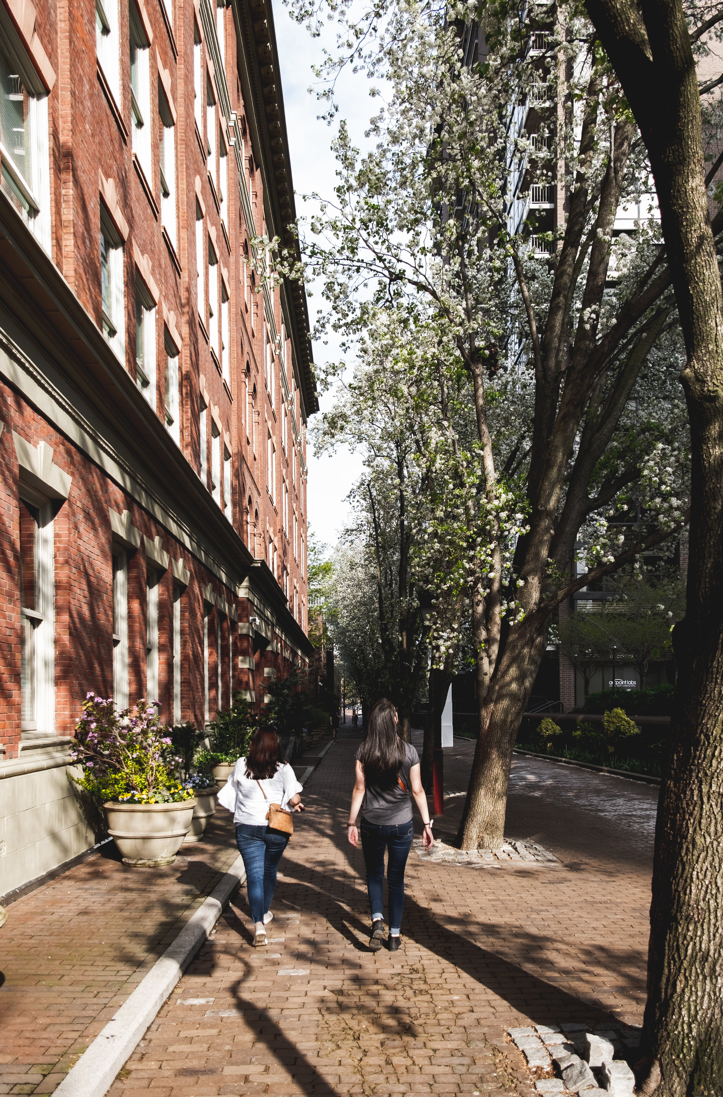 2019_TREES WALKWAY_THE PHILLY CHECKLIST-1.jpg