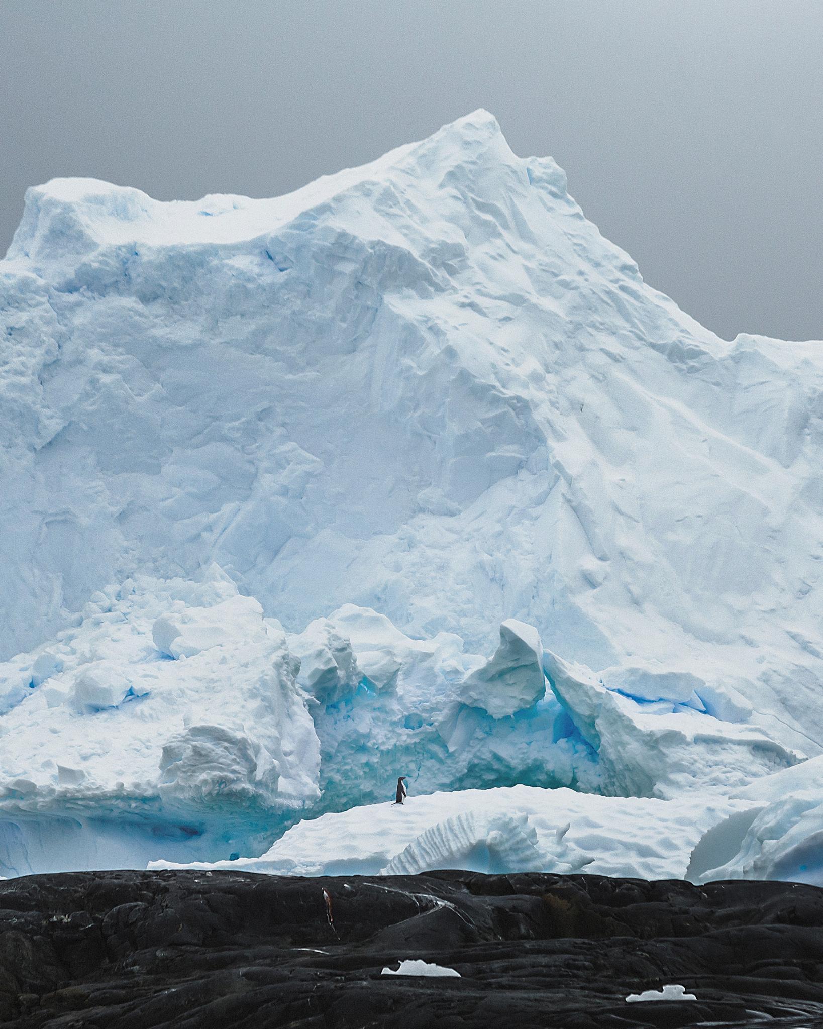 Lone Adelie Penguin, Antarctica