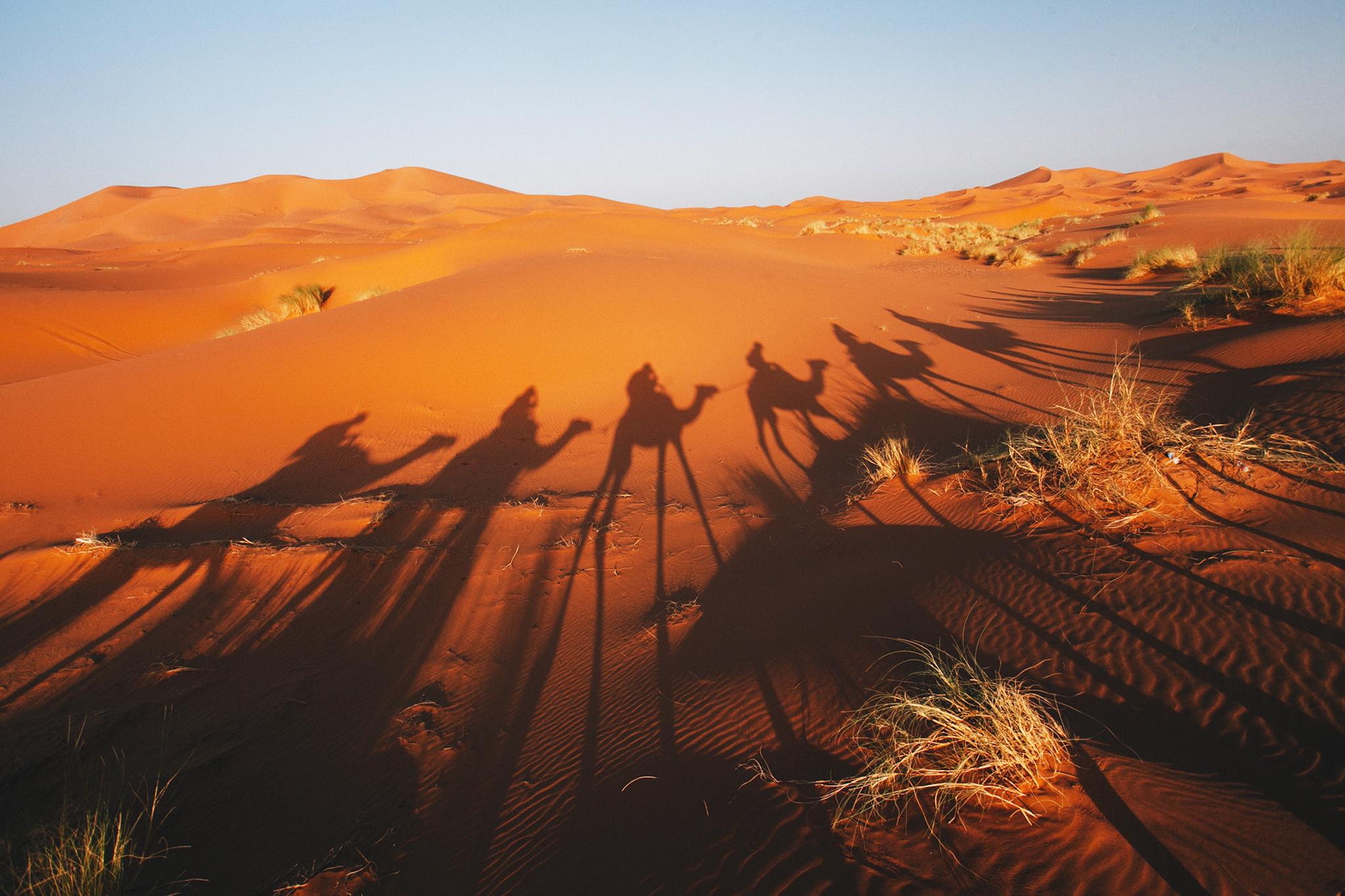Camel Trek, Moroccan Sahara