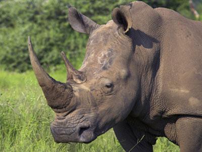 rhino-charge-1.jpg
