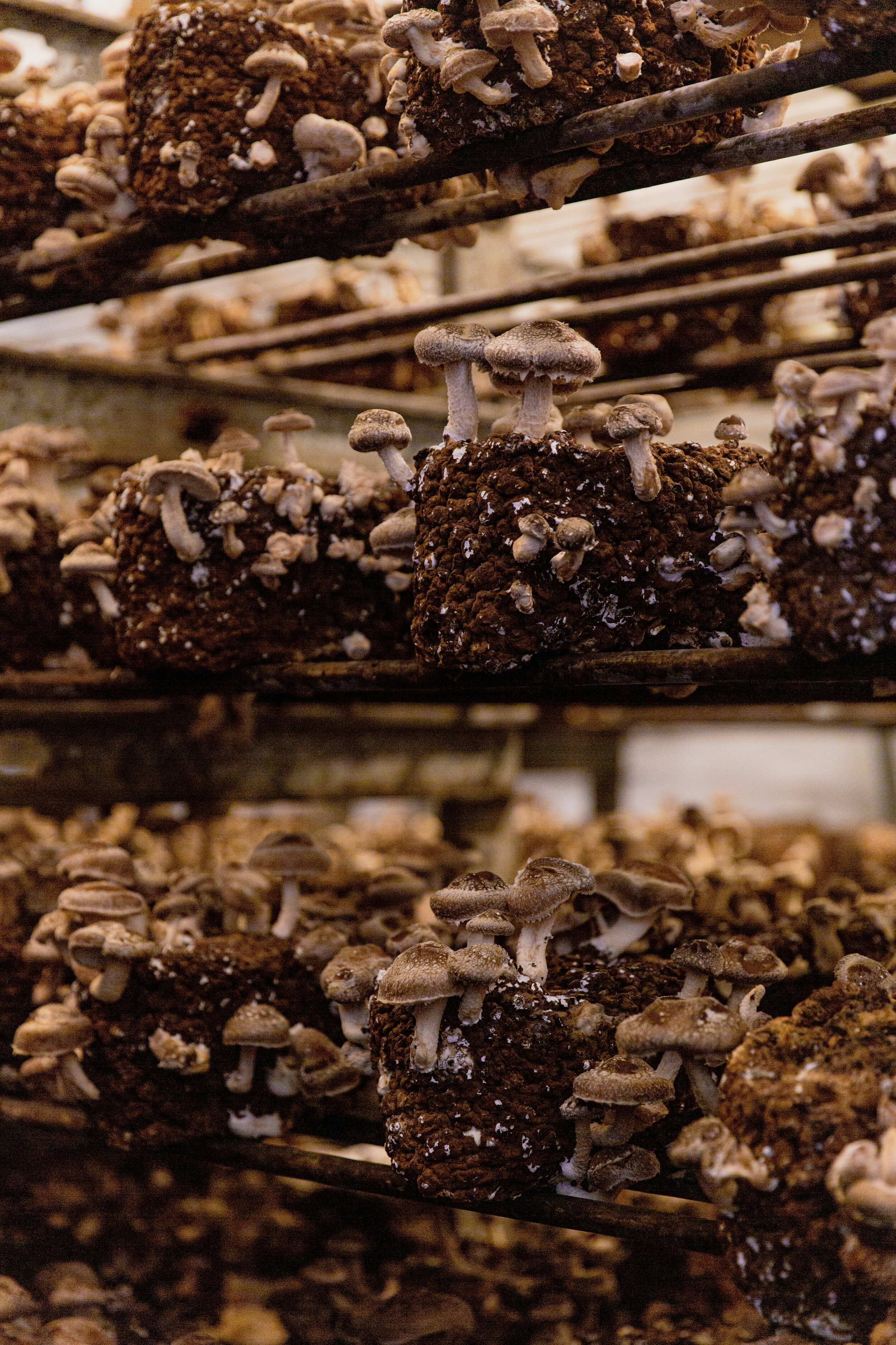 River City Shiitake Mushrooms Portland, Oregon | The Purposeful Plate