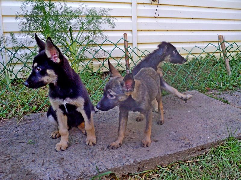 SochiDogs Puppy 3