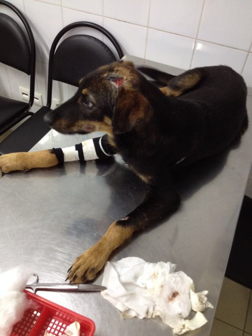 At the vet,October 2014