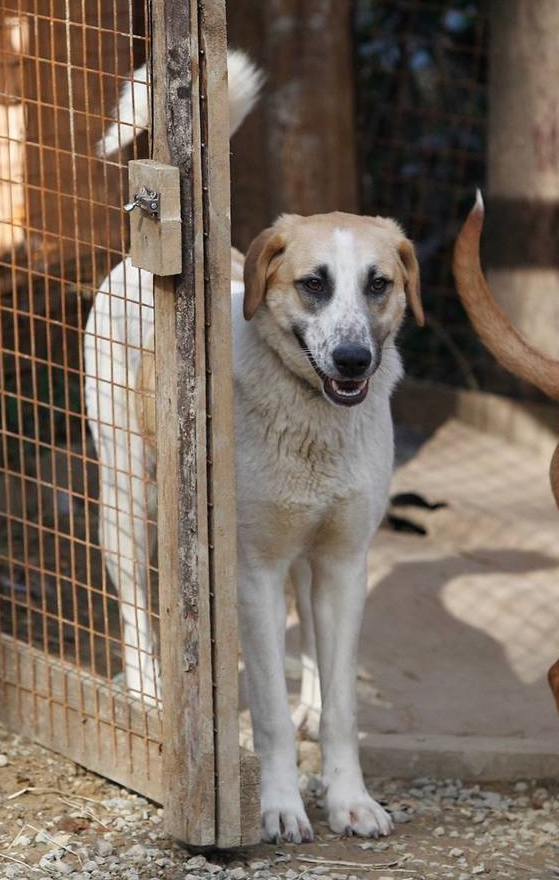 Gerda    at the shelter, summer 2014