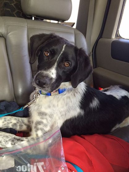 Stetson (Tony), Texas  Read his rescue and see pictures on his Facebook page.