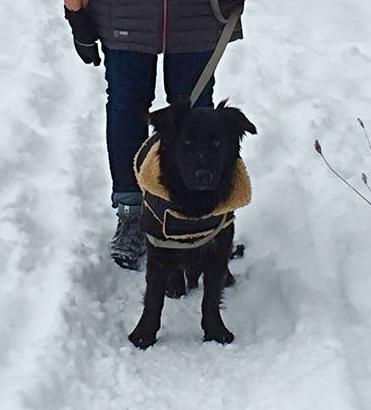 Stevie (Tata), Ontario