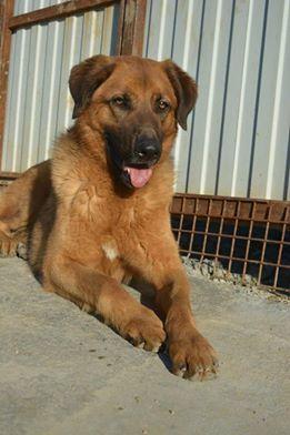 Sochi Dog Philip