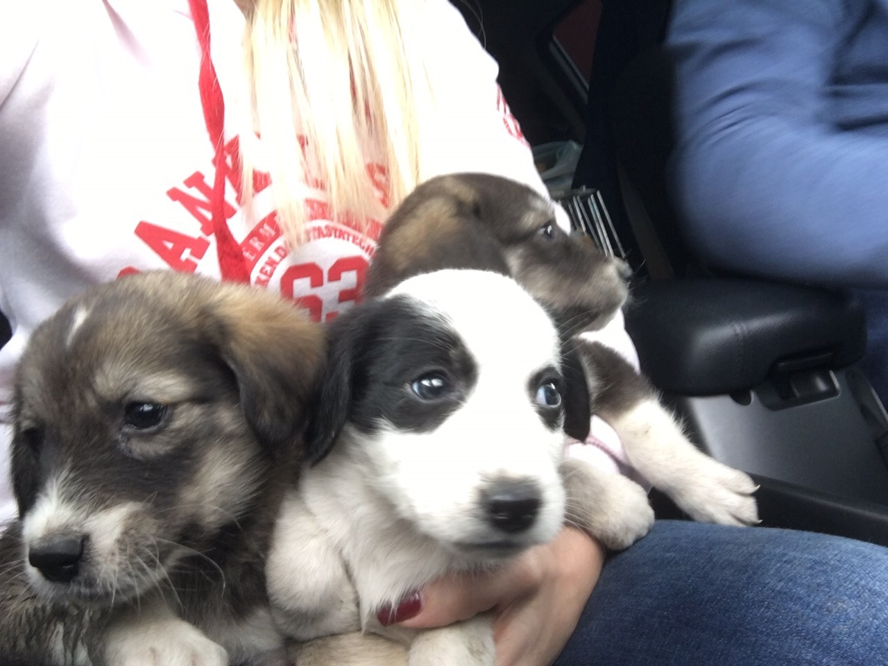 Sochi Dogs Double  rescue May 6