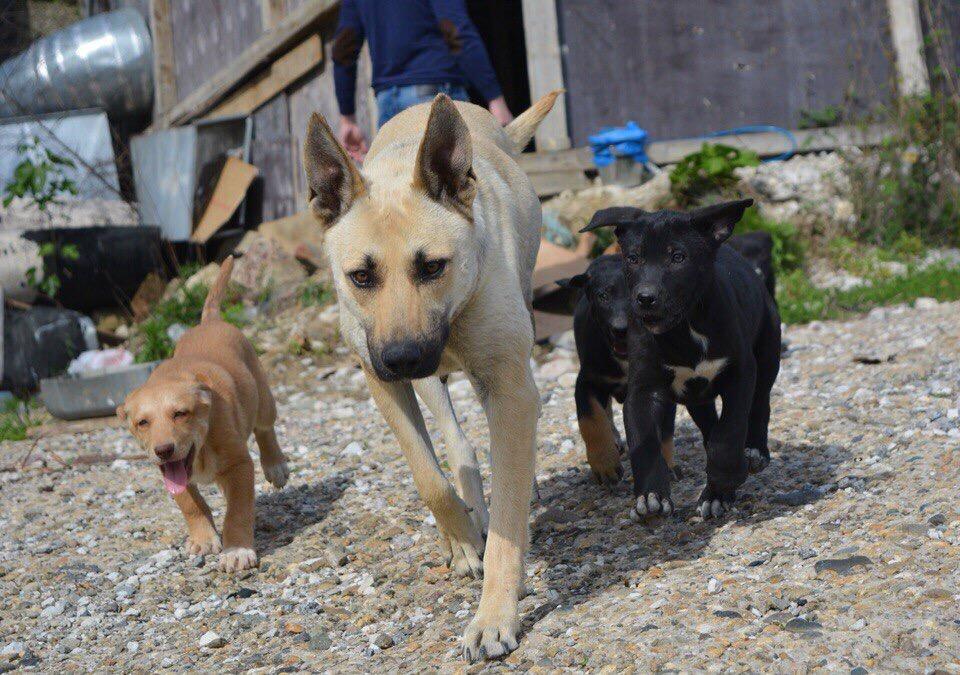 Sochi Dogs