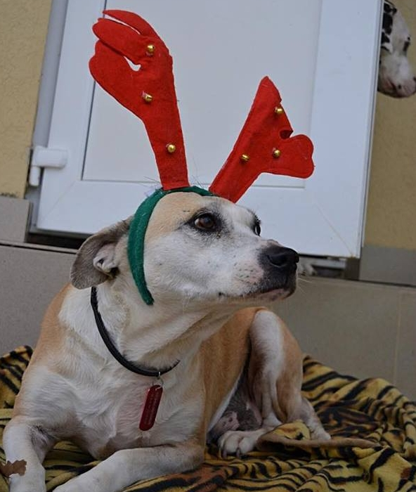 Sochi Dogs.jpg