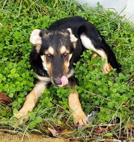 Sochi_dogs.JPG4.JPG