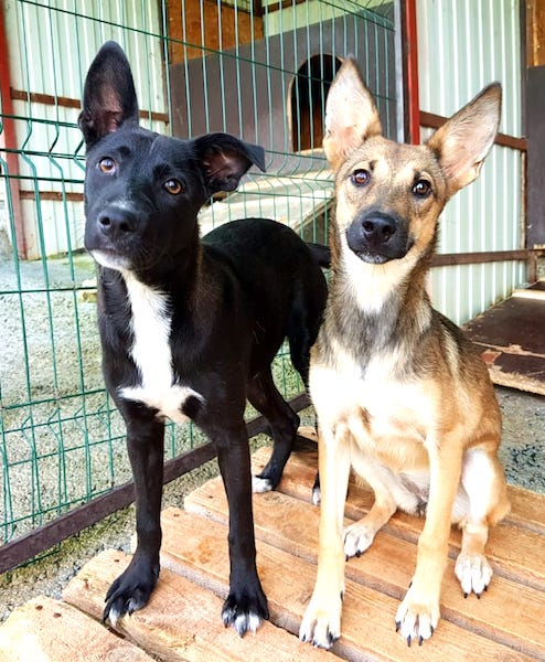Available Dogs   - Your best friend is waiting for you at our shelter. For every dog that gets adopted another one is rescued. Save a life, adopt!