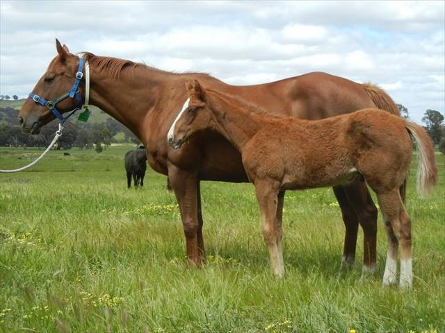 written tycoon x star of the stalls colt