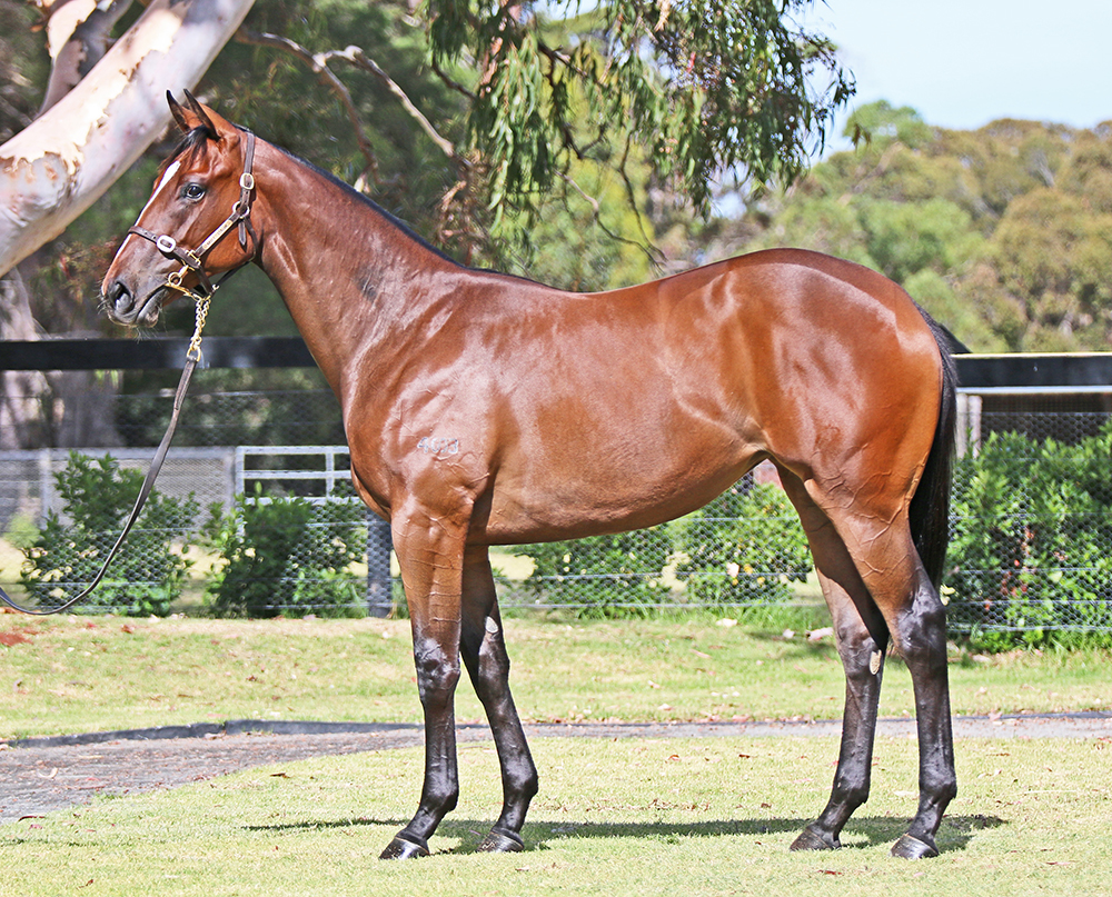 Lot 38 Filly I Am Invincible x Furline, by Tale of the Cat (USA)