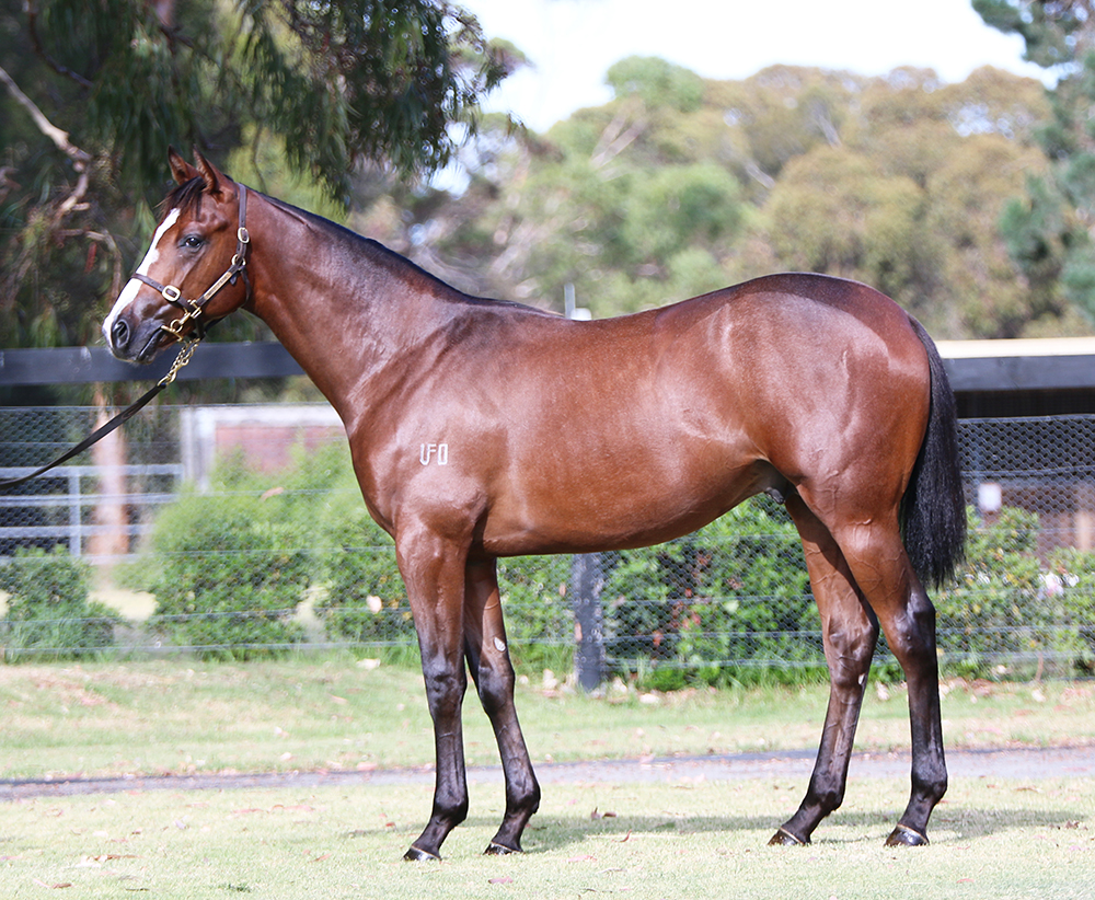 Lot 128 Colt Medaglia D'Oro (USA) x Kaimana(USA), by Tale of the Cat