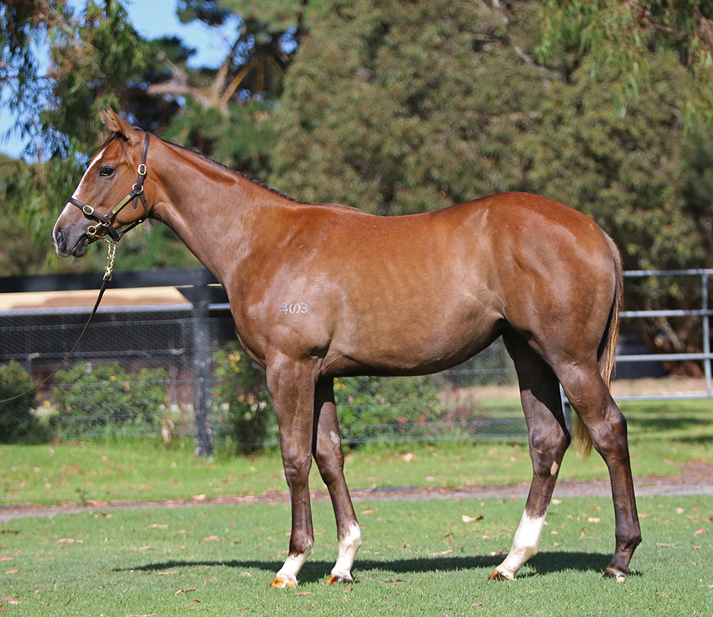 Lot 651: Chestnut Filly, Shooting To Win x Dane Belltar, by Danewin