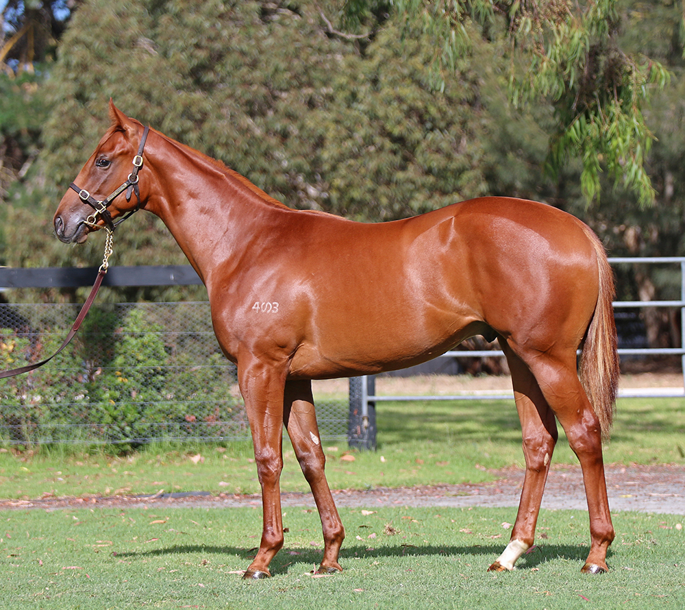 Lot 422: Chestnut Colt, Shooting To Win x Victory Cry, by General Nediym