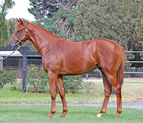 Fast And Loose Colt 2016.jpg