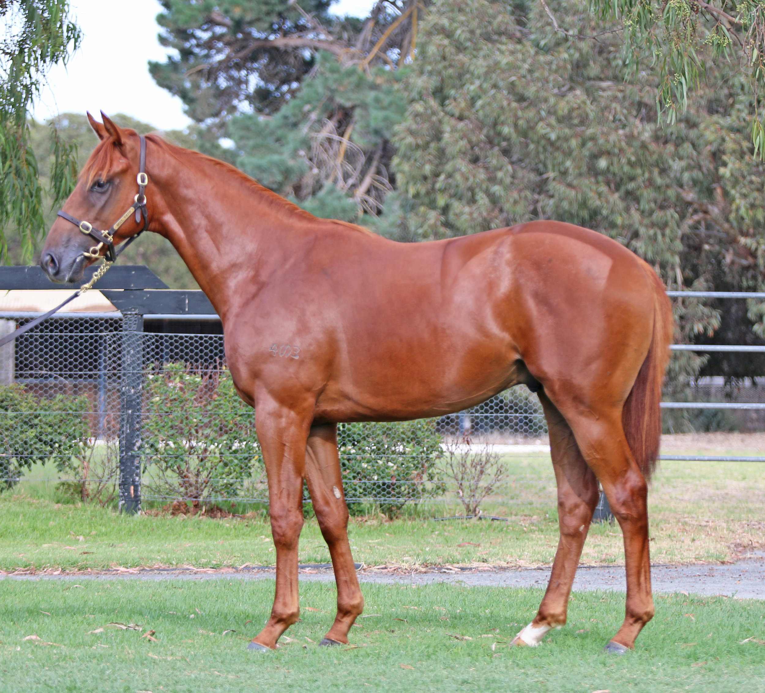 Lot 31 Fast And Loose Colt 2016.jpg