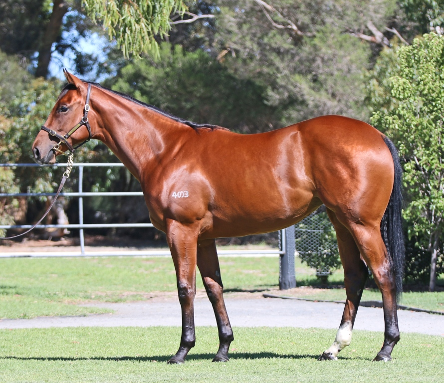 Lot 371 Starts With A Kiss Filly 2014_low res.jpg