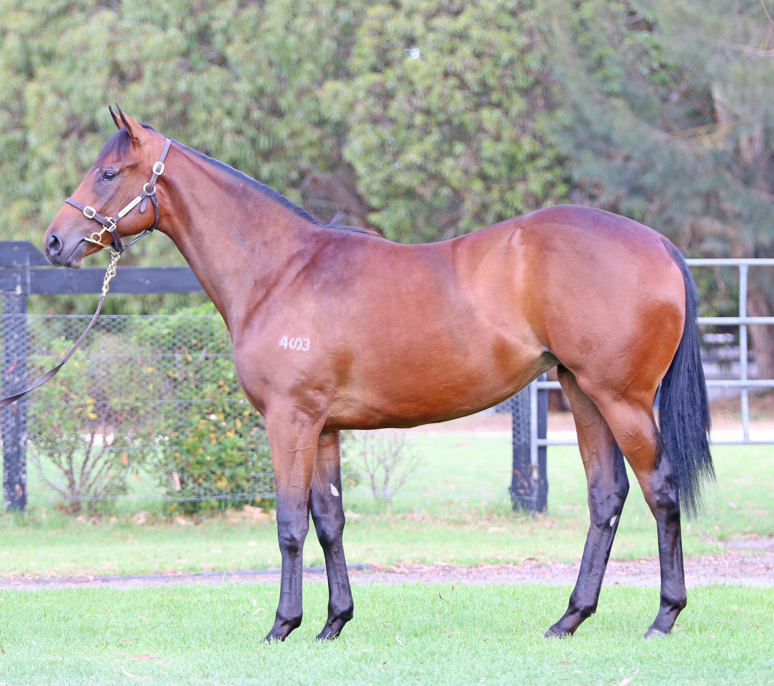 Lot 547 - Elusive Wonder Filly 2017.jpg