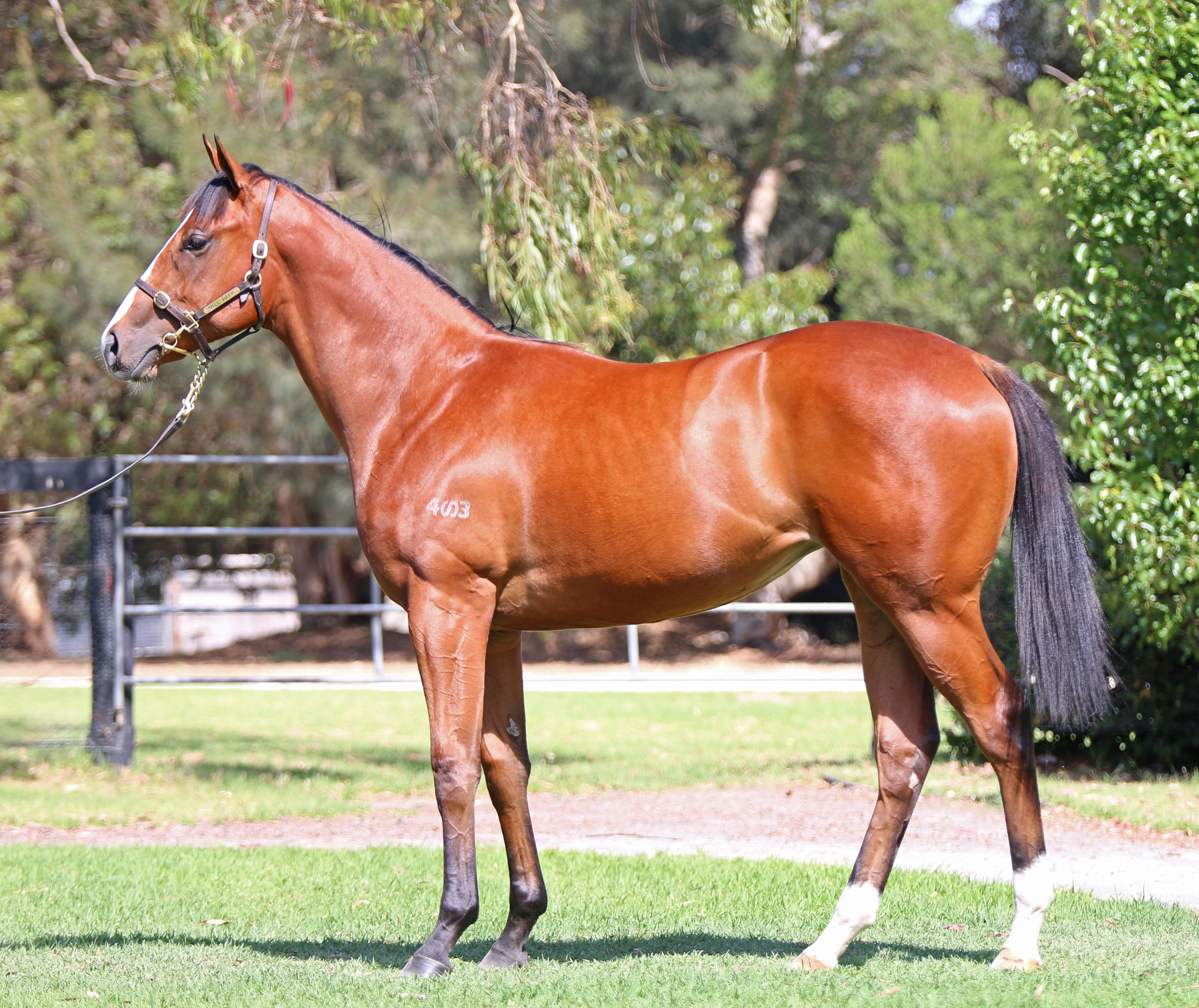 Lot 667 - Hussy By Choice Filly 2017.jpg