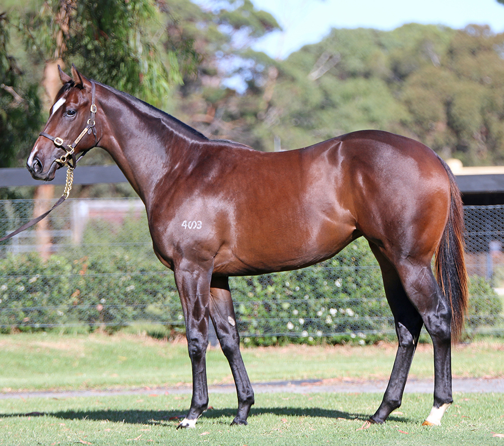 Victory Cry Filly 2015_lr.jpg
