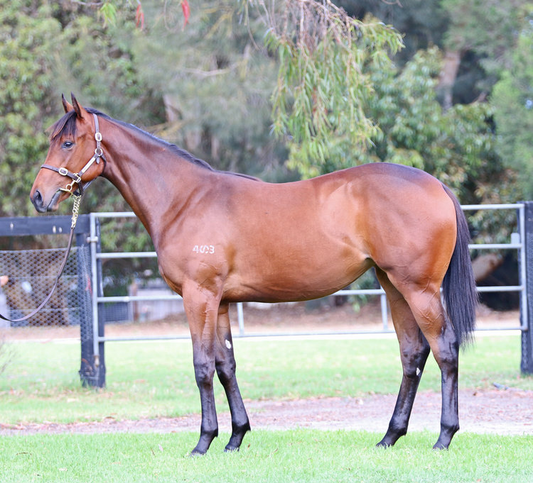 Lot 112: I Am Invincible x Sensualism filly sold for $300,000
